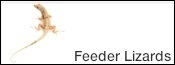 Buy feeder lizards online