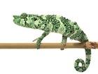 Buy a Mellers chameleon