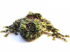 Buy a Mossy frog