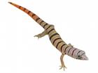 Buy an Ashy gecko