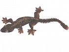 Buy a Flying gecko