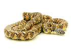 Buy a Brooks King snake