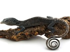 Buy a Blue tree monitor