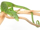 Buy a Green tree monitor