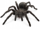 Buy a Brazilian Black Tarantula