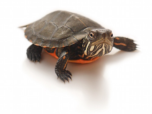 Where Can You Buy Turtle Food