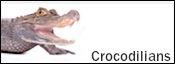 Alligators for sale