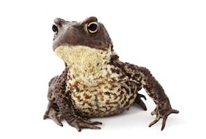 Toads for sale online